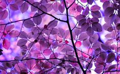Purple Leaves - Wallpaper | GFXHive