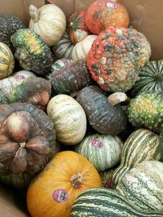 Beautiful ugly pumpkins