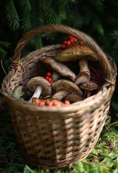 Autumn Day, Autumn Leaves, Fotografia Macro, Mushroom Fungi, Farm Life, Country Life, Faeries, Stuffed Mushrooms, Pumpkin
