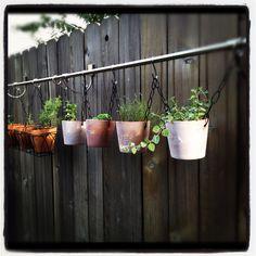 DIY curtain rod herb garden super cute and big butt dogs won't break them lol