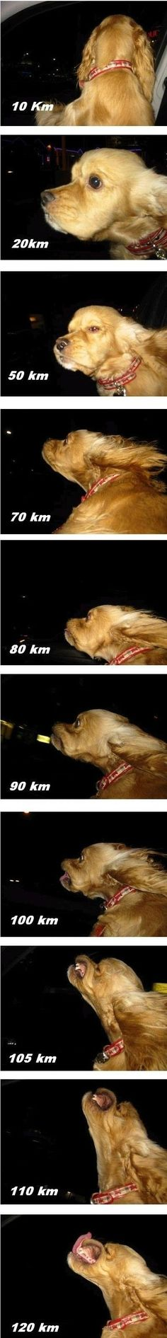Photos of a dog sticking its head out the car window at increasing speeds...: