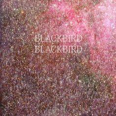 Blackbird Blackbird.