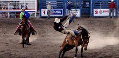 pour le cow boy de monter un cheval sauvage sellé (saddle bronc) ou non (bareback bronc) et de rester en selle respectivement 10 ou 8 secondes pour l'une et l'autre des épreuves.
