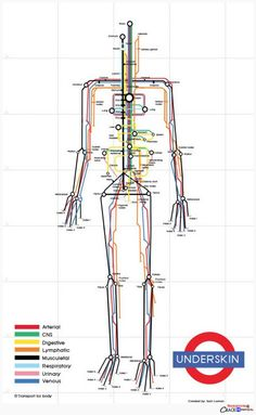explore-blog:      So clever – the human body visualized as a subway map by designerSam Loman, a fine addition to these visual metaphors using he London Tube map.    Also see these vintage illustrations envisioning the body as a machine.      Mind the gap junctions.    Updated version here.   (via explore-blog)