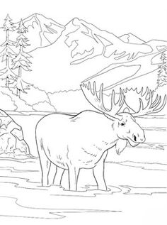 coloring page New coloring pages on Kids-n-Fun. These are the very latest coloring pages on Kids-n-Fun. At Kids-n-Fun you will always find the nicest coloring pages first! Free Adult Coloring, Printable Adult Coloring Pages, Moose Pictures, Pictures To Paint, Animal Coloring Pages, Coloring Book Pages, Animal Drawings, Art Drawings, Dandelion Drawing