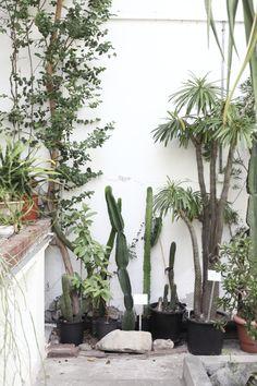 szklarnia ogrodu botanicznego uniwersytetu warszawskiego