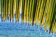 #1191 Islands, Waves, Outdoor Decor, Home Decor, Island, Ocean Waves, Interior Design, Home Interior Design, Wave