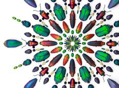Pheromone by Christopher Marley