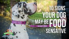 DO NOT FEED10 Signs Your Dog May Have Allergies or Food Sensitivities By Katie ShannonJust like people, dogs can suffer from allergies and food sensitivities. While more dogs have sensitives than true allergies, both can have a devas...