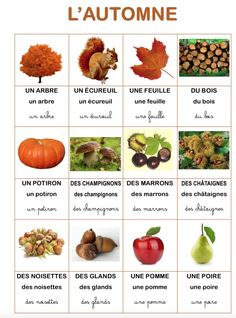 Resultado of vocabulary imagen the autumn . French Teaching Resources, Teaching French, How To Speak French, Learn French, French Education, Montessori Education, French Classroom, Fall Preschool, Petite Section