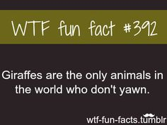Weird Wtf Fun Facts | facts MORE OF WTF-FUN-FACTS are coming HERE funny and weird facts ...