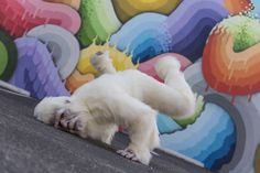Yeti's got mad skillz. Takin' it to the streets in the Grand Central Arts District of St. Pete.