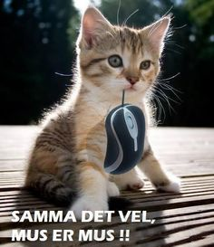 Pun puppy Love Cute Cats 35 Funny Animals You're Sure To Love 41 Funny Animal Pictures Funny Animal Jokes, Funny Cat Memes, Cute Funny Animals, Animal Memes, Cute Baby Animals, Funny Cute, Cute Cats, Animal Quotes, Funny Gifs