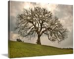 Old Oak Tree: Texas Hill Country Art Prints by Paul Huchton - Shop Canvas and Framed Wall Art Prints at Imagekind.com