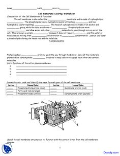Cellular Respiration Worksheet Biology Pinterest