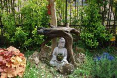 Albero della Pace - Peace meditation tree