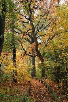 Nyssa sylvatica autumn color by Brooklyn Botanic Garden, via Flickr