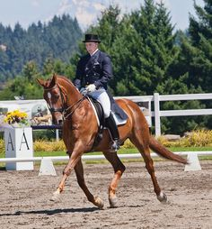 Increase your dressage horse's mobility