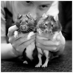Rat trousers by Faugel, via Flickr