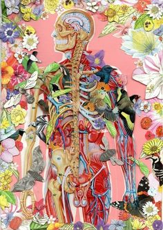 Anatomy Collage by Ben Giles #art