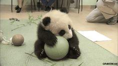 I love my ball!