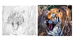 Zoo Animals Lesson Plan: eBook and Activities Zoo Animal Coloring Pages, Zoo Animals, Activities, How To Plan, Art, Art Background, Kunst, Performing Arts, Art Education Resources