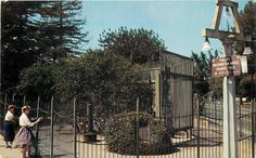 Riverside California~Friendship Grove~Parent Naval Orange Tree~1950s Postcard   eBay