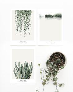 3 x Postcard Botanics