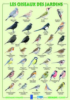 Les oiseaux, comptez-vous ! Opération « Comptage oiseaux des jardins » les 26 et 27 janvier 2019 - Faune Sauvage