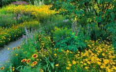 Gallardias in a prairie-style border Vintage Gardening, Gardening Books, Garden Plants, House Plants, Victorian Era, Botany, Golden Age, Orchids, Landscape