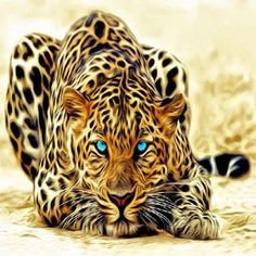 wallpaper desktop pictures of big cats in the wild wallpapers Beautiful Cats, Animals Beautiful, Stunningly Beautiful, Gorgeous Eyes, Hello Gorgeous, Absolutely Gorgeous, Animals And Pets, Cute Animals, Wild Animals