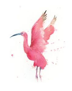 Watercolor Scarlet Ibis Print Bright by WatercolorPaperie on Etsy