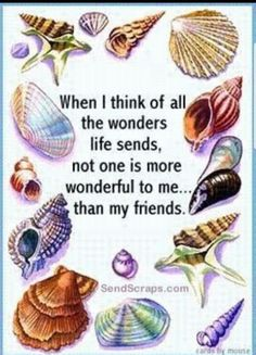 Discover and share Seashell Poems And Quotes. Explore our collection of motivational and famous quotes by authors you know and love. Find Friends, Real Friends, Ocean Poem, Positive Quotes, Motivational Quotes, Printable Quotes, Friends Forever, Famous Quotes, Life Is Beautiful