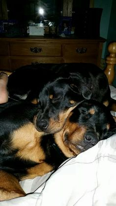 Reminds me of Roxie and Damien my two babies who past years ago !!!!! #love4ever