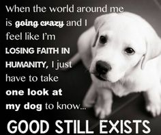 25 Inspirational Advice Given By The Pets In Your Life - I Can Has Cheezburger? You will find the best quotes about dogs on my account. Dog Quotes, Animal Quotes, Qoutes, Hamsters, I Love Dogs, Puppy Love, Losing Faith In Humanity, Pet Sitter, Food Dog