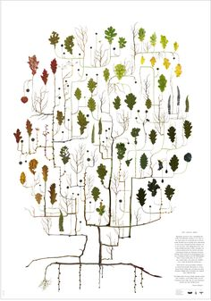 Tree illustrations made if real plant parts, pressed and digitilized. Such a clever idea by  Lotta Olsson.
