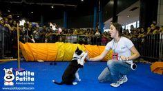 """Espacio recreativo creado por PatitaPatita en """"Expo nuestros perros"""""""