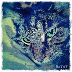 My Noah. Get a portrait of your pet at www.bztatstudios.com. #Noah #custompetportrait #digitalart #digital #catart #catlover #catsofinstagram #iphoneography #bztatart