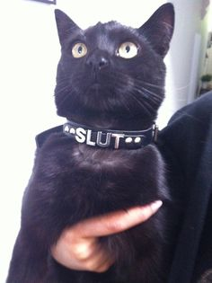 #Cats #Cat #Collar #BlackCat #Slut