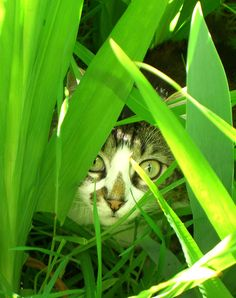 Peek-a-boo. I see you!