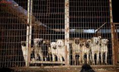 Taiwan continua no combate ao consumo de carne cães em contraposição à prática asiática