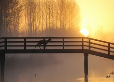 ree bij zonsopkomst