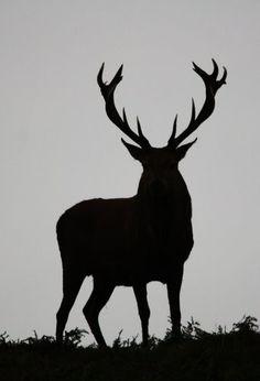 Red Deer Silhouette by D Belton
