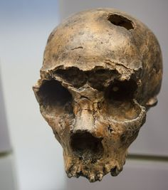 Italy's first Neanderthal dates back 250,000 years.  Neanderthal man arrived on the Italian peninsular some 100,000 years earlier than previously thought, according to a study set to be published this month. Cast of Saccopastore 1 skull at the National Museum of Natural History [Credit: Adam Foster/WikiCommons] The discovery was made after researchers analyzed radioactive deposits that were found in sediments present inside two Neanderthal skulls unearthed in a gravel pit ...