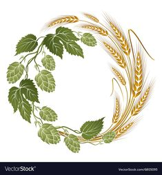 Illustration of hops and wheat illustration for beer label vector art, clipart and stock vectors. Wheat Drawing, Free Vector Images, Vector Free, Hop Tattoo, Beer Hops, Beer Art, Label Templates, Label Design, Body Art Tattoos