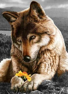 Wolf and flower