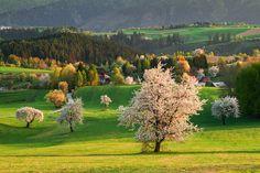 from Slovakia @ SME.sk ~ Vaše fotky (májový a júnový výber) Carpathian Mountains, Mountain Landscape, Heritage Site, Czech Republic, Natural Beauty, Vineyard, Nice, Spring, Day