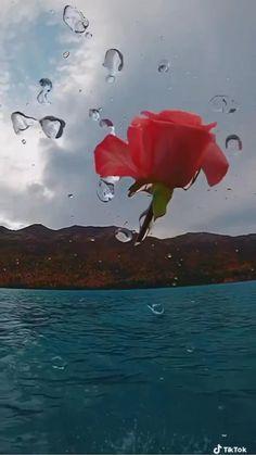 Wallpaper Nature Flowers, Flowers Gif, Flower Phone Wallpaper, Beautiful Nature Wallpaper, Best Nature Images, Beautiful Photos Of Nature, Beautiful Gif, Beautiful Roses, Good Morning Beautiful Flowers