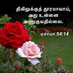 Bible Words, Verses, Rose, Flowers, Plants, Pink, Scriptures, Plant, Lyrics