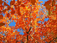 Nature Wallpaper Fall Leaves Wallpapers Iphone Beautiful